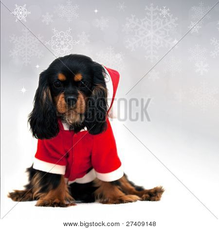 Marmaduke the black and tan Cavalier wears a Santa Suit isolated on festive snowflake background. Space for your text