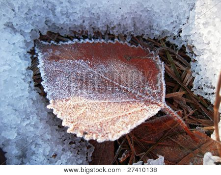 Red frozen leaf and cold winter morning