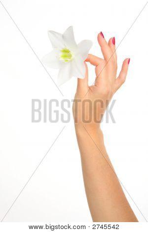 Feminine Hand With Flower