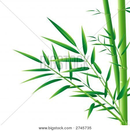 Bamboo And Leaves