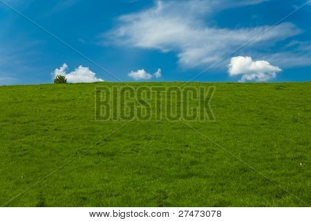 Field with grass and sky