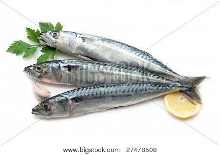 mackerel and lemon on white
