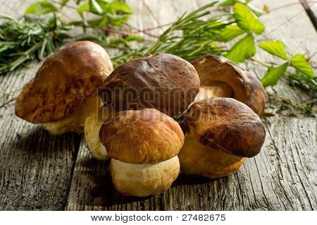 cep on wood background