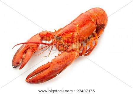 whole lobster boiled