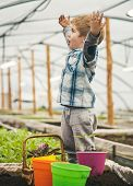 Happy Gardener. Happy Little Gardener. Happy Gardener With Raised Hands In Greenhouse. Happy Gardene poster
