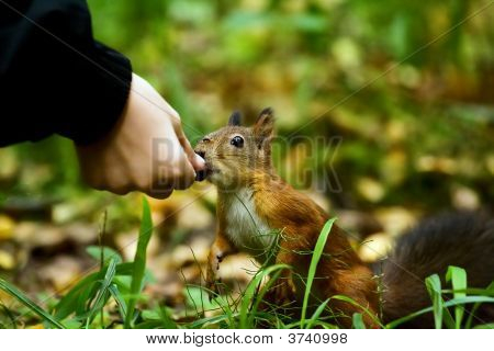 Hand And Squirrel