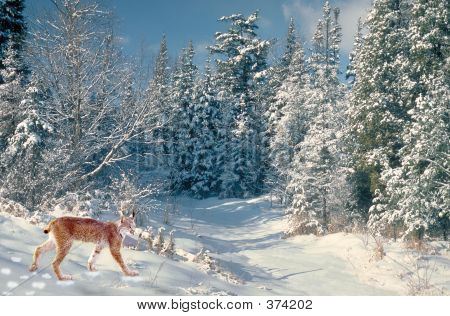 Lynx In Winter Wonderland
