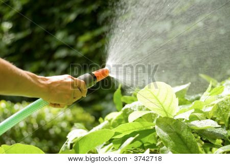 Hose With Sprinkler
