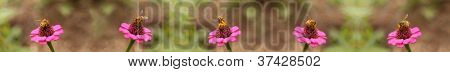 honey bees worker bee border background