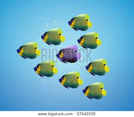 Purble Angelfish Between Group Of Green Angelfish