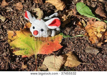 Ratón de otoño