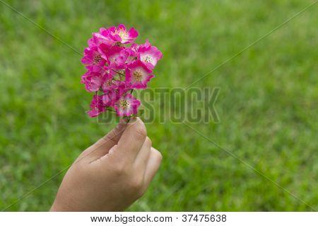 Girls Hand Holding A White Flower