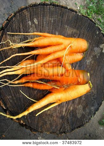 bunch of carrots laying on the stub
