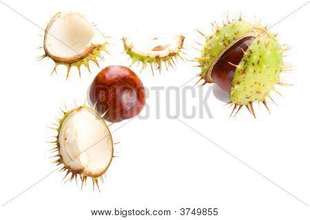 Autumn Shaken Chestnuts