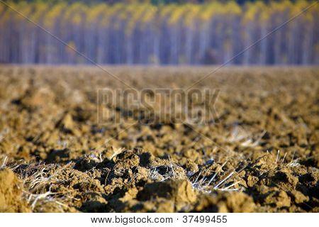 Lunca Muresului National Park, Romania, Europe