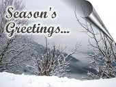 pic of seasons greetings  - Christmas Card Image with Season - JPG