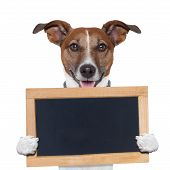 foto of placeholder  - placeholder banner dog looking to the front - JPG