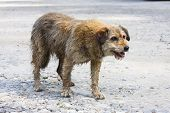 stock photo of pity  - Abandoned dog begging for food in the street - JPG
