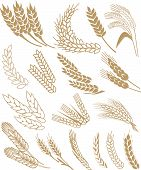 Постер, плакат: Пшеница вектор