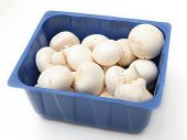 picture of agaricus  - Button mushrooms - JPG