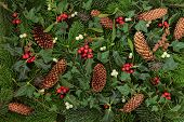 stock photo of english ivy  - Winter flora and fauna of holly - JPG