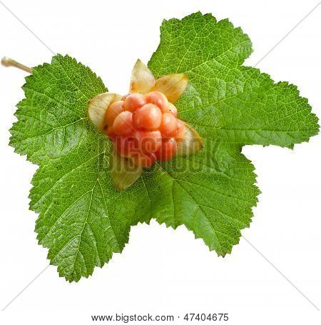 cloudberry one rire berry close up isolated on white background