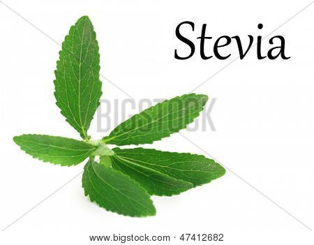 Stevia Rebaudiana leaves isolated on white background