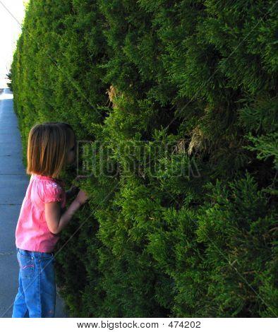 Peeking Through The Hedges