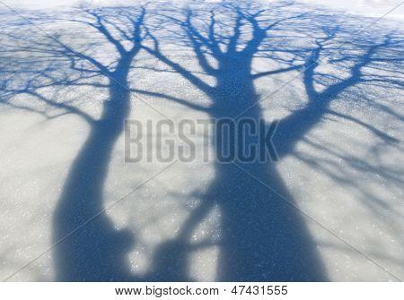 Sombra de uma grande árvore na neve