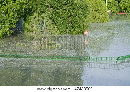 Flooded Green Fence