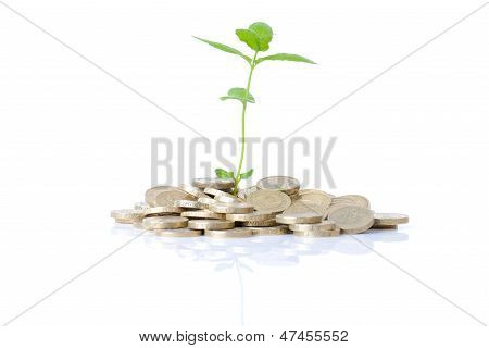Growth In Coins