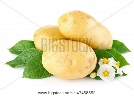 Potatoes With Leaves And Flower