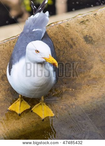 seagull close, symbolic photo for vacation, wanderlust, longing