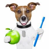 image of dog teeth  - dog with big white teeth with an apple and a toothbrush - JPG