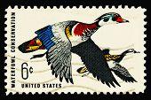 Waterfowl 1968