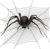 image of black widow spider  - big spider in the web - JPG