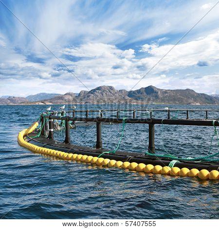 Round Fish Farm Cage In Norwegian Sea