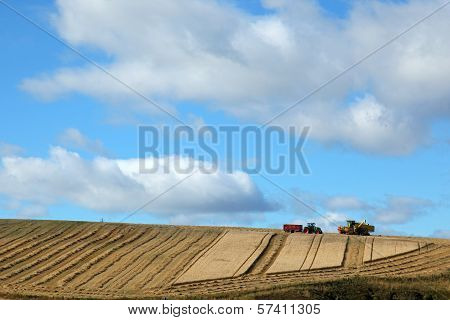 Straw Bales In Scotland
