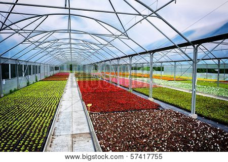 Greenhouse For Flower Growing