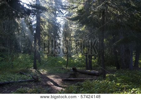 Okanogan-Wenatchee National Forest, USA