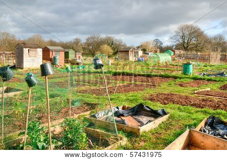 Vegetable Allotments