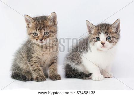 Two Fluffy Kitten Sitting, Looking In Disbelief