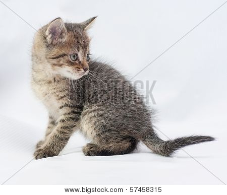 Striped Fluffy Kitten Turned To Run