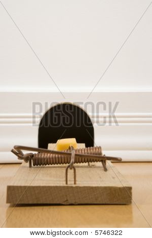 Mousetrap In Front Of A Mouse Hole