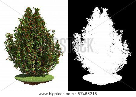 Bush Isolated on White Background.