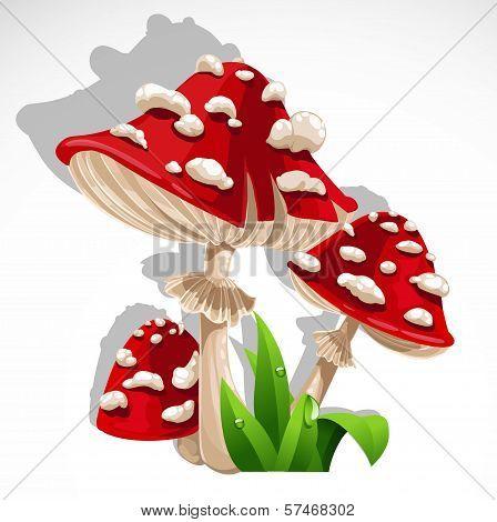 Red Fresh Mushroom Amanita In Grass