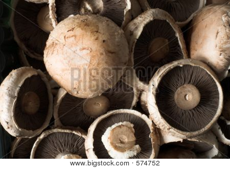 Common Brown Edible Mushrooms