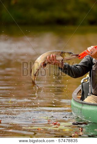 Fishing In A Canoe For A Pike Fish