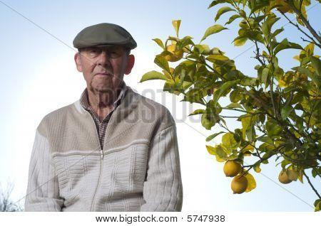 Sad Senior Man Next To Lemon Tree