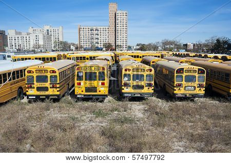 New York City school buses In the United States